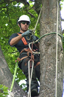 Tree care and equipment